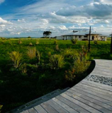Our 'boardwalk' with native plantings